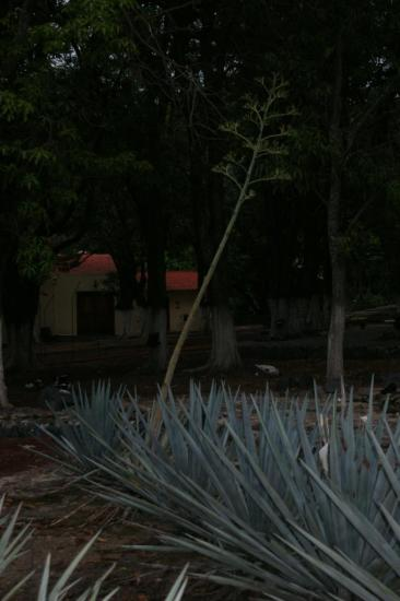 Tequila 10